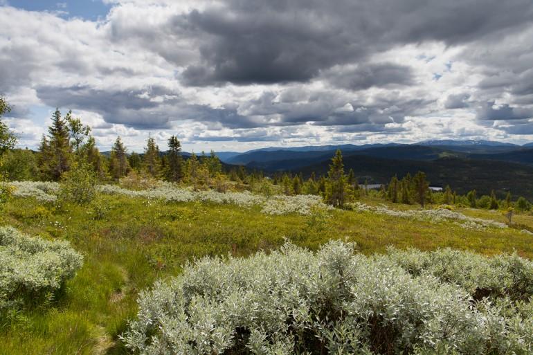 Alpine terrain close to Gaustatoppen