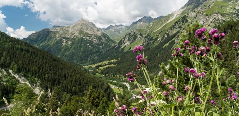 Swiss Alps Majola